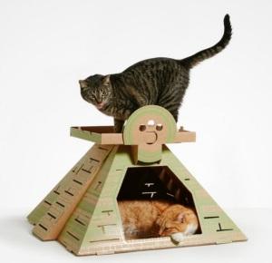 Mayan temple cat shelter