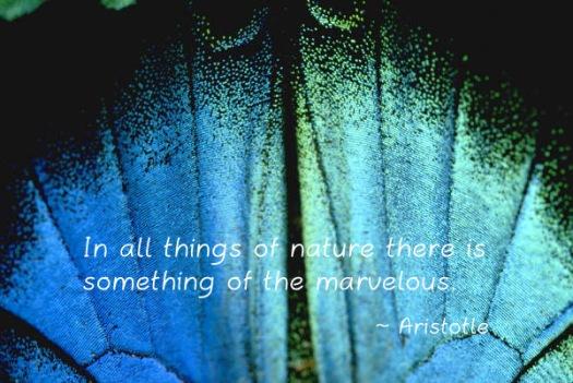 moth-quote