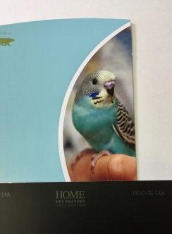 parakeet blue